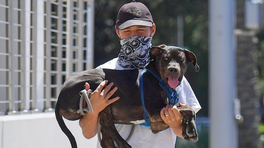 Welcher US-Schauspieler trägt hier seinen Hund auf dem Arm?