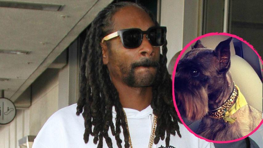 """""""R.I.P. Cindy"""": Snoop Dogg trauert um Familienhund"""