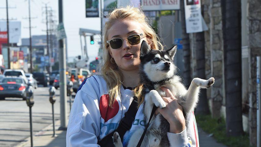 Sophie Turner und ihr Hund Porky in West Hollywood