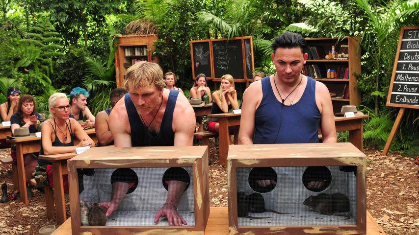 Ansgar Brinkmann und Matthias Mangiapane bei ihrer Dschungel-Prüfung