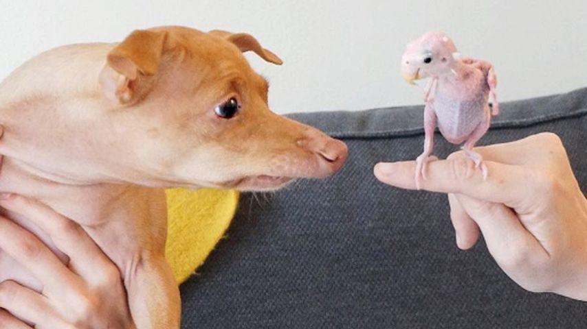 Papagei Rhea & Hund Tuna: Treffen sich zwei Nackte...