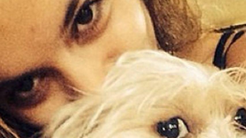 Verschmust: Vanessa Hudgens knuddelt ihren Hund