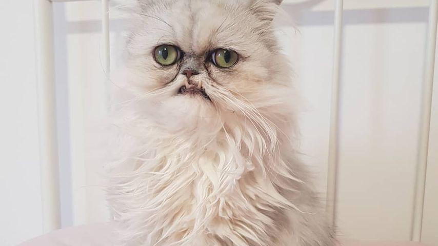 Süß oder gruselig? Diese Instagram-Katze spaltet das Netz
