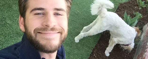 Liam Hemsworth mit seinen Hunden