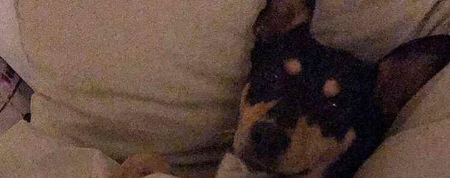 Gigi, Sila Sahins Hund